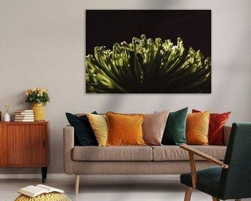 Blume grün von Fotograaf Astrid Schalk/Moments by Astrid