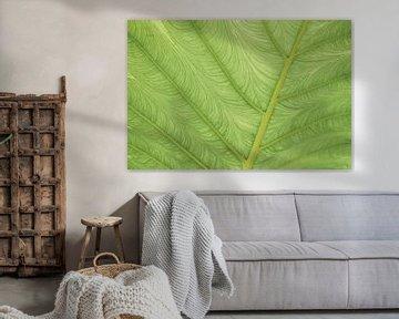 Groen blad van dichtbij | abstracte natuurfotografie van Marjolijn Maljaars