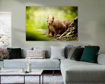 Eekhoorn van Eva Bos