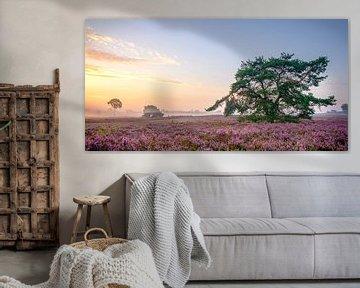 Kiefer umgeben von blühenden Heidekrautpflanzen bei Sonnenaufgang von Sjoerd van der Wal