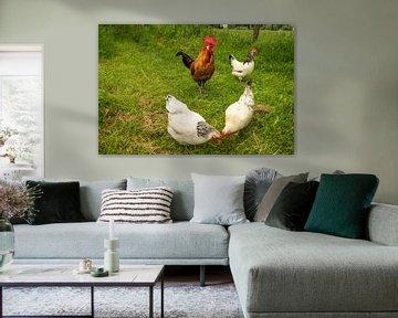 Hühner und Hahn in der Natur von Roland de Zeeuw fotografie