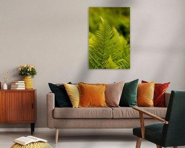 Bohemian Design mit Farnen, Fine Art Makro Foto von Karijn | Fine art Natuur en Reis Fotografie