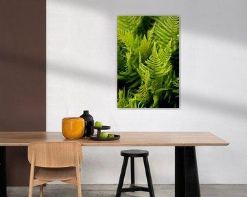Grüne Farne, ein böhmisches Design, Fine Art Makro Foto von Karijn | Fine art Natuur en Reis Fotografie