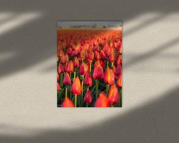 Tulpenzee en Dorp von David Hanlon