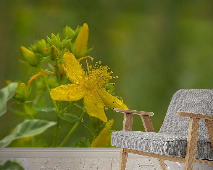 Impression: Fleur de Millepertuis sur Kristof Lauwers