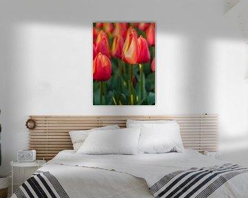 Tulpen von David Hanlon