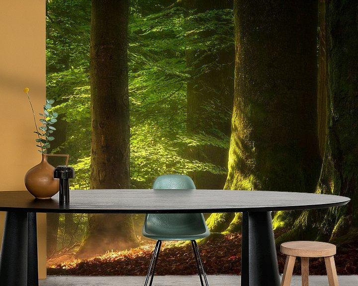 Impression: La forêt après la pluie sur Jeroen Lagerwerf