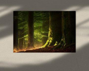 The Earth Soul - Bos na de regen van Jeroen Lagerwerf