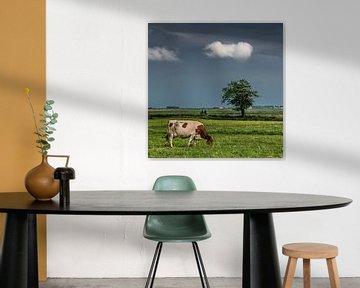 Landschaft in Friesland mit Kuh und Radfahrer in der Nähe des Dorfes Sondel