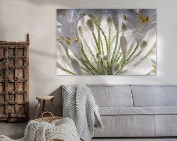 Schmucklilie in Eis 3 von Marc Heiligenstein