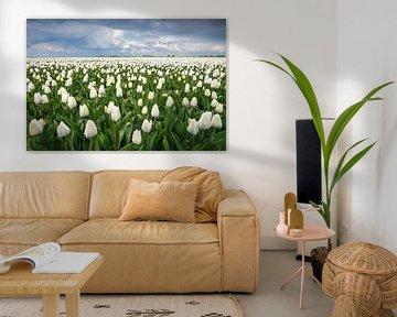 Weißes Tulpenfeld von Jeroen Schouten