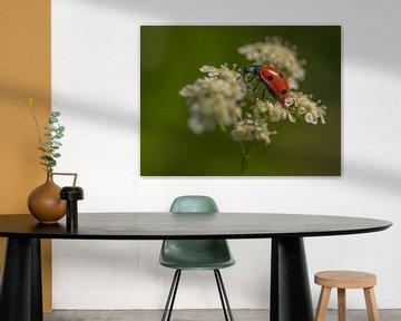 Lieveheersbeestje van Karen de Geus