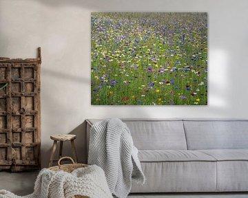 Wilde bloemenveld met voornamelijk paarse en blauwe tinten