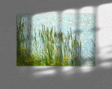 Gras am Meer von Niek Traas