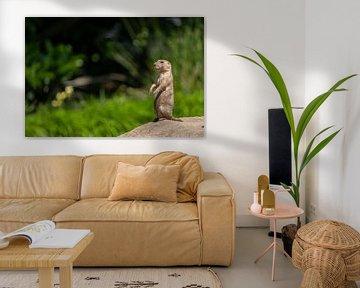 Prairiehondje op de uitkijk van Saskia Kochheim