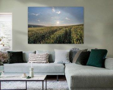 Sonnenaufgang in einem Maisfeld