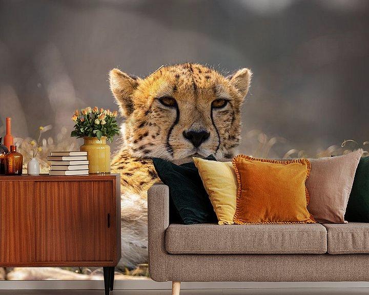 Sfeerimpressie behang: Jachtluipaard, Cheeta. Acinonyx jubatus van Gert Hilbink
