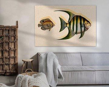 Fischiger Fisch von Rudy en Gisela Schlechter
