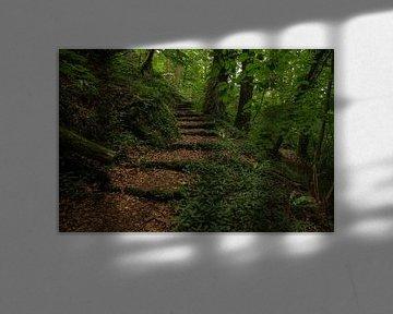 doorkijkje bospad met trap van FotoBob
