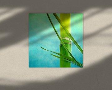 Bambus sur INA FineArt