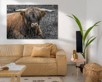 Schotse hooglander / Highland cattle van Henk de Boer