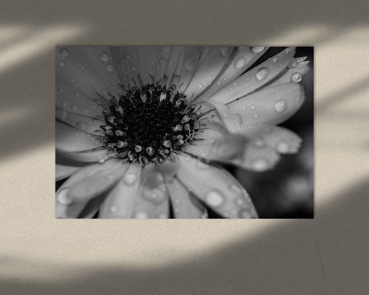 Sfeerimpressie: Kern in het zwart wit van JM de Jong-Jansen