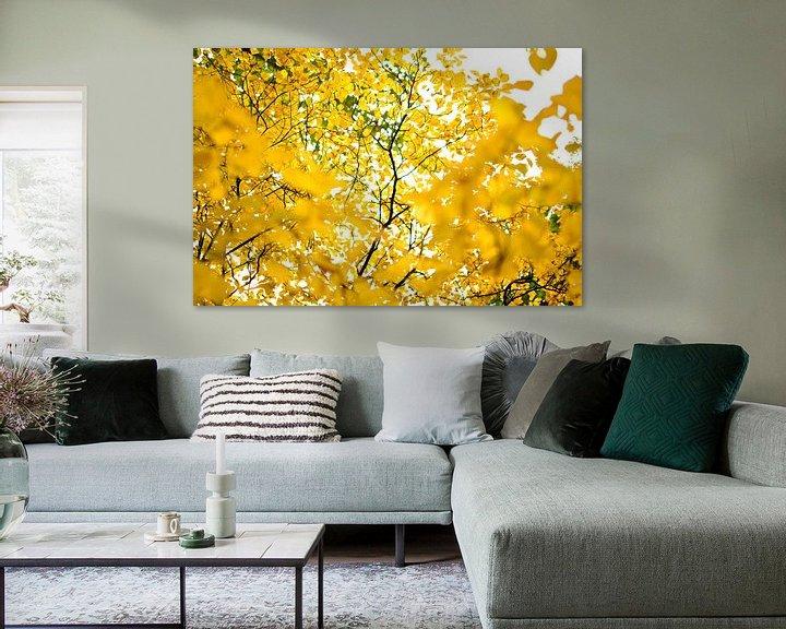 Sfeerimpressie: Gele bladeren in het park van Ricardo Bouman