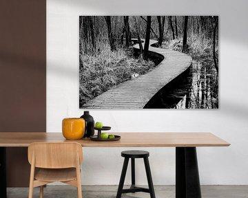 Zagzag à travers les bois dans le Brabant | Pays-Bas