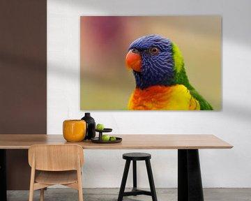 Portret van een Regenboog Lori