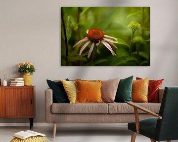 Sonnenblume im Garten von Marijke van Loon
