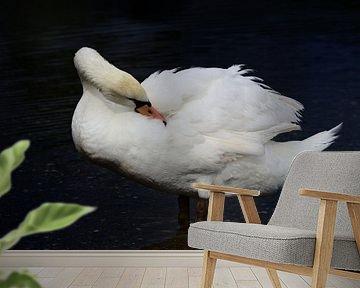 Verzorging witte zwanenveren van Ulrike Leone