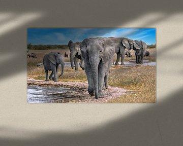 Olifanten in Etosha Nationaal Park, Namibië van W. Woyke