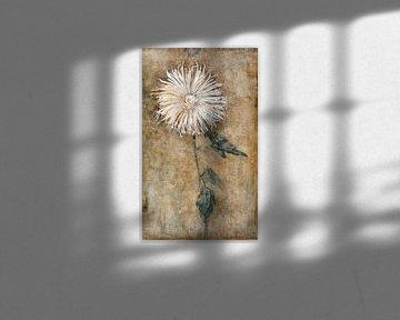 Chrysantheme, Piet Mondriaan