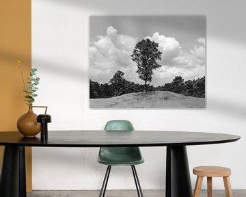 Ein einsamer Baum von Jurrian Tanke