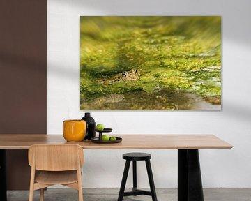 Frosch im Teich von Irene Lommers