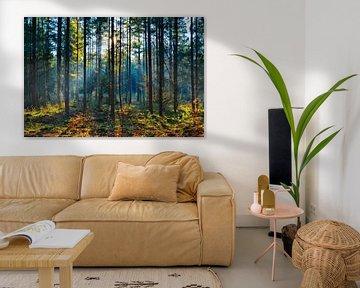 Een koude herfstochtend in boswachterij Gieten-Borger van Fred van Bergeijk