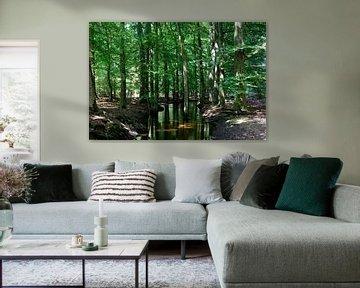 Een beek door een zomers bos van Gerard de Zwaan