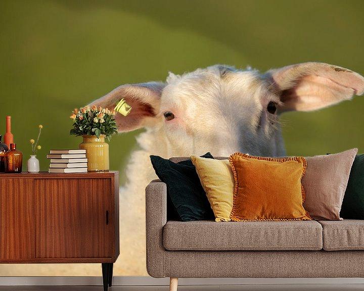 Impression: moutons en zélande sur anne droogsma