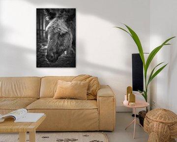 Esel von Rob Boon