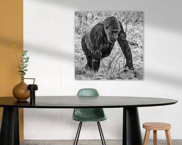 Gorilla van Rob Boon