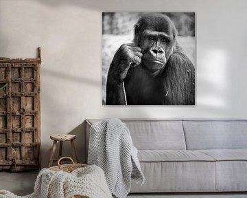 Gorilla von Rob Boon