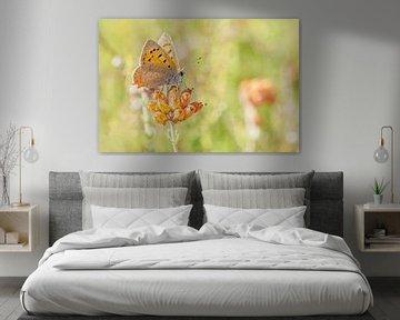Glühwürmchen auf braunem Heidekraut von Roosmarijn Bruijns