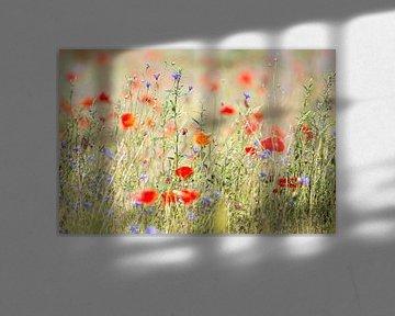 Veld vol wilde bloemen en klaprozen