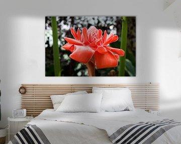 Tropische bloem van Studio Maria Hylarides