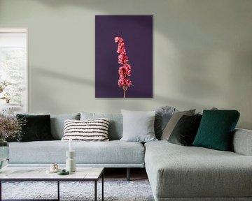 Roze Droogbloem (paars) van michel meppelink