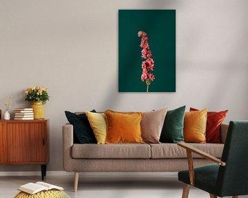 Roze Droogbloem (groen) van michel meppelink