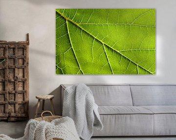 Grape leaf van Focco van Eek
