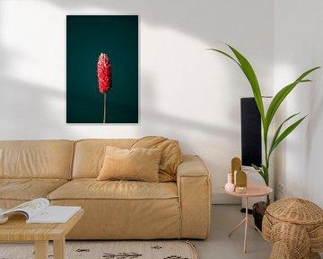 Rode Droogbloem (groen) van michel meppelink