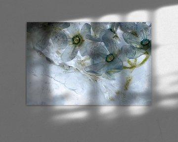 Blauwe zijdebloem in ijs 1 van Marc Heiligenstein