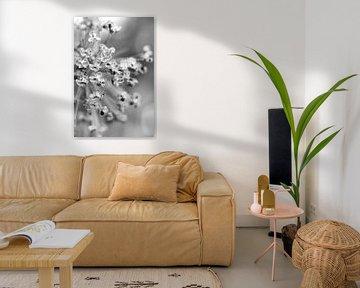Dekorative Zwiebel, Allium von Sabine Bouwmeester